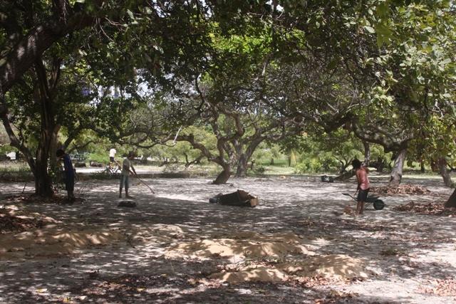 A bonita história do Parque de Capim Macio