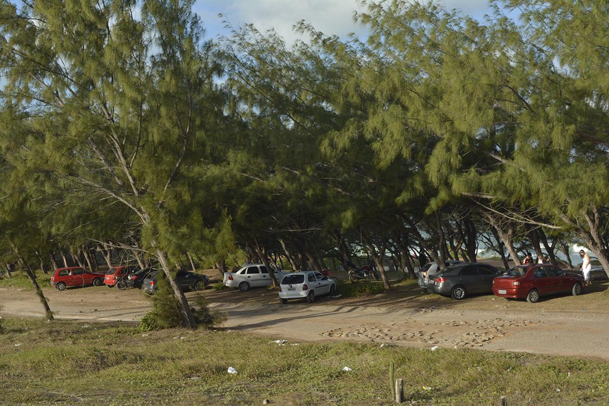 Pinheiros da Via Costeira será um parque?