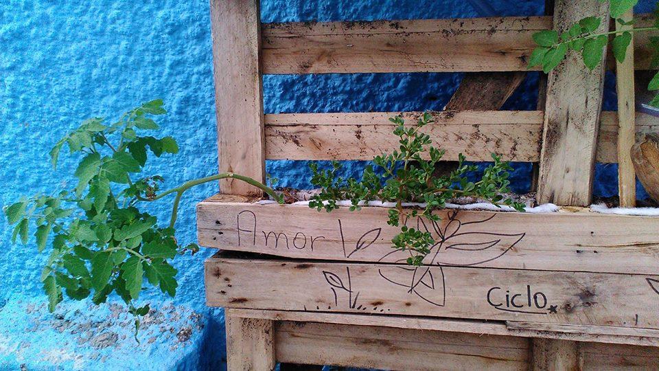 Como aprender a fazer uma horta orgânica no Mercado de Petrópolis