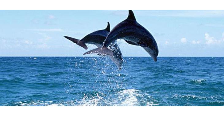 Golfinhos são vítimas de pesca acidental em Natal