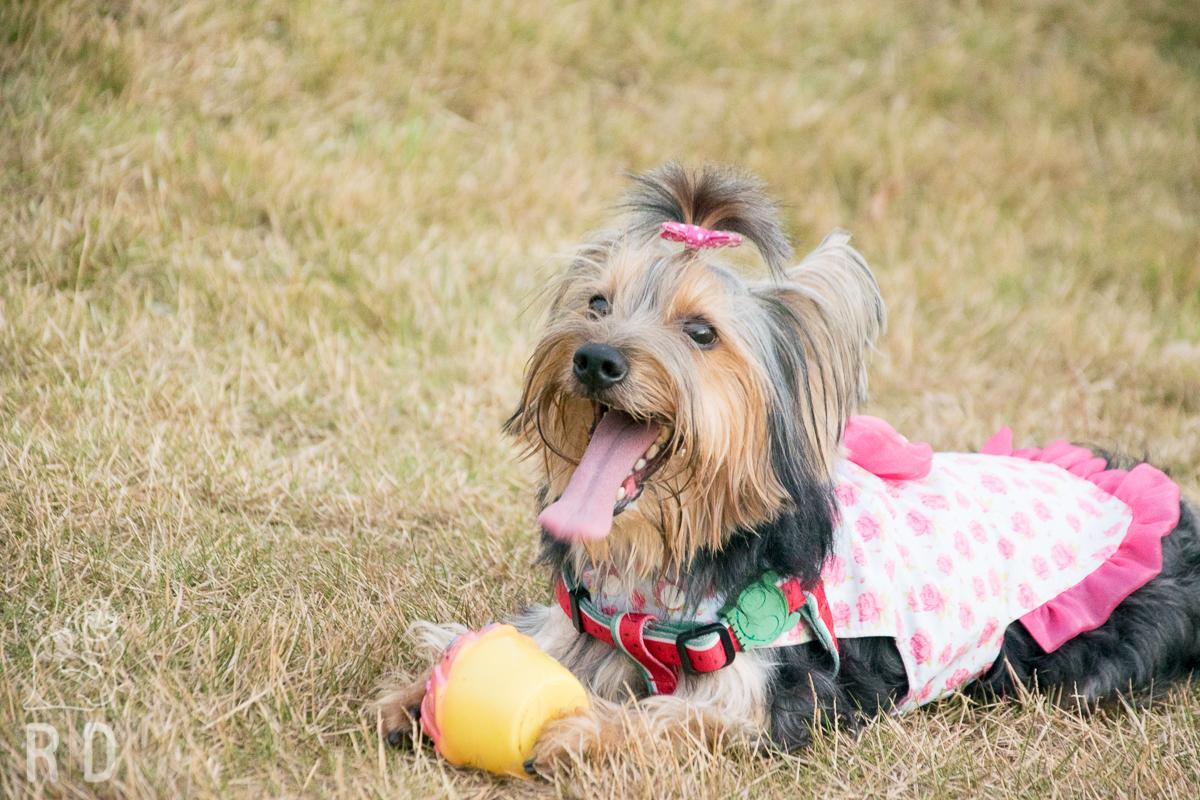 Participe de encontro de cachorrinhos e adoção de animais