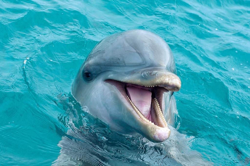 Onde encontrar golfinhos no RN ?
