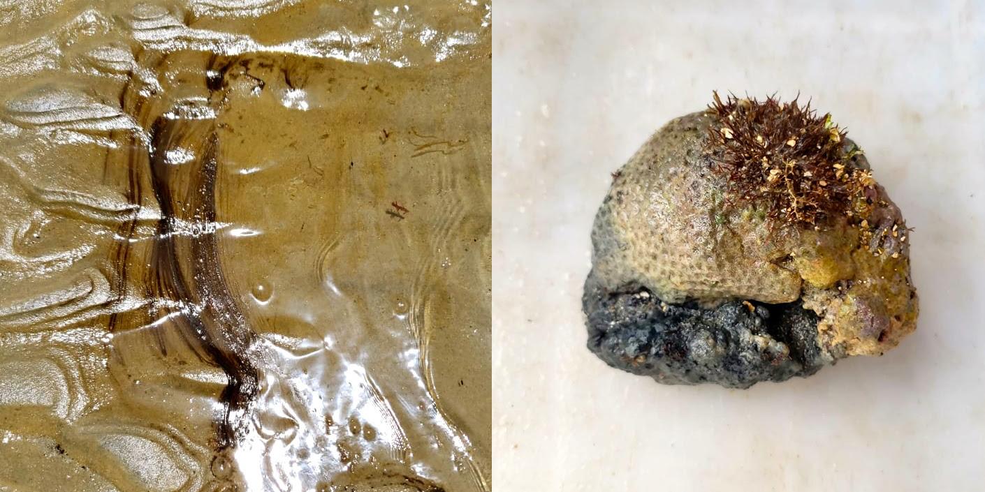 Vazamento de óleo atinge os parrachos de Pirangi