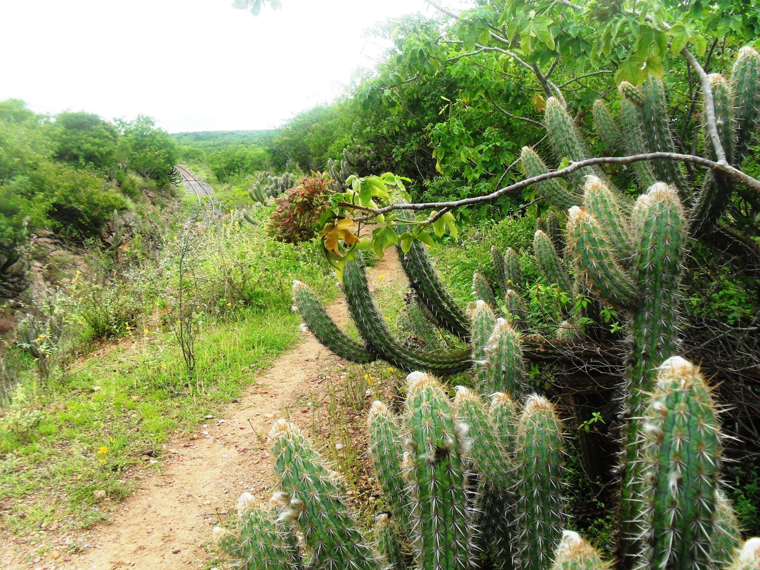 Estudo da UFRN descobre novas áreas desmatadas da Caatinga