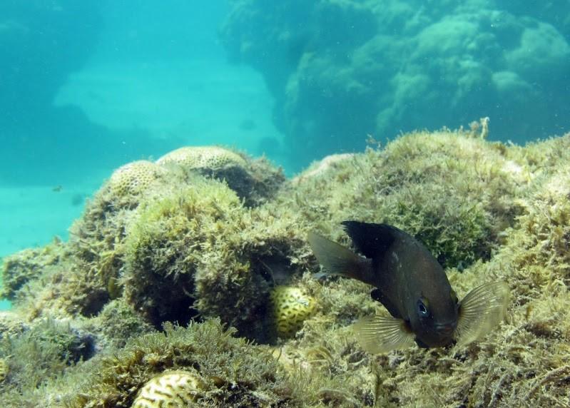 Peixinho do RN sofre com aquecimento global